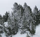 Free Photo - Snow in Andorra