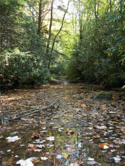 Leaf Filled Stream - Free Stock Photo