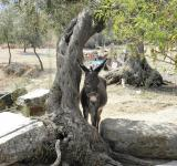 Free Photo - Donkey resting in shade