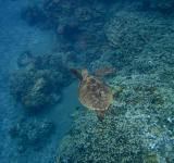 Free Photo - Sea Turtle