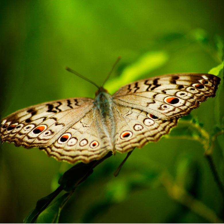 Free Stock Photo of Butterfly Created by Ashish