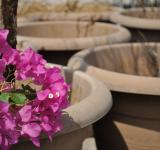 Free Photo - Bouganvilla and Terracotta