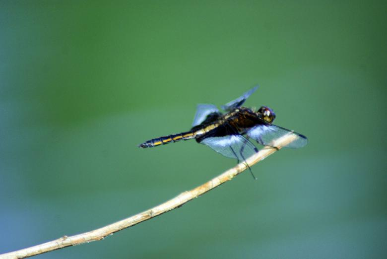 Free Stock Photo of Dragon Fly Created by Brian Norcross