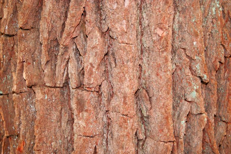 Free Stock Photo of Tree Bark Background Created by Brian Norcross