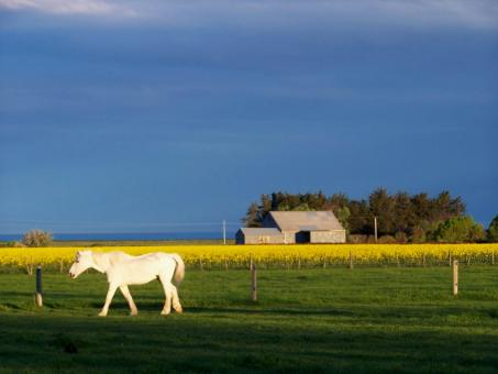 White Horse and Old Tin shed - Free Stock Photo