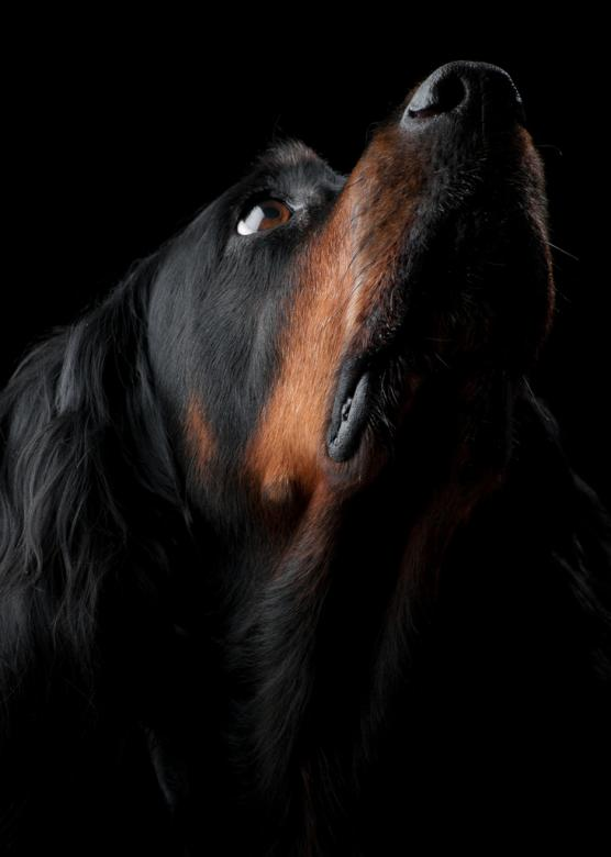 Free Stock Photo of Black Dog Portrait Created by Christian Andersson
