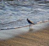 Free Photo - Piper At The Sea's Edge