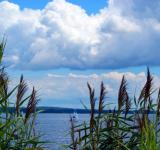 Free Photo - Ocean Through Tall Grass