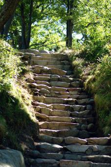 Natures Stairway - Free Stock Photo