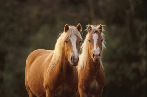 Free Horse Stock Photos