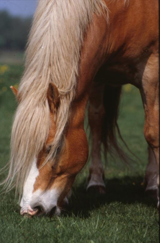 Free Stock Photo of Horse Created by MUNCH PIERRE
