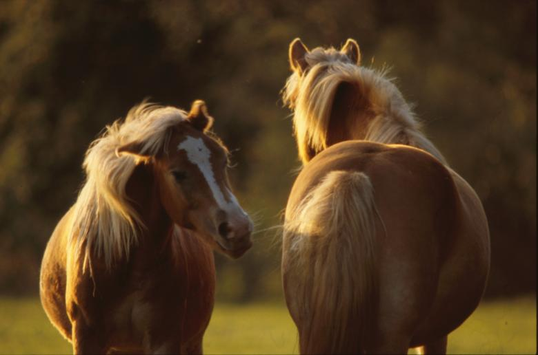 Free Stock Photo of Horses Created by MUNCH PIERRE