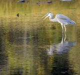 Free Photo - Crane In Shallow Waters