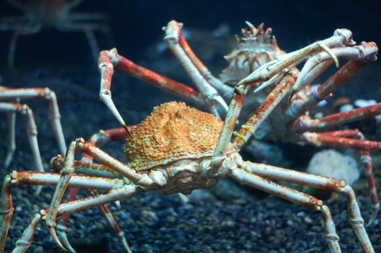 Free Stock Photo of Fighting crabs Created by Jon Estes