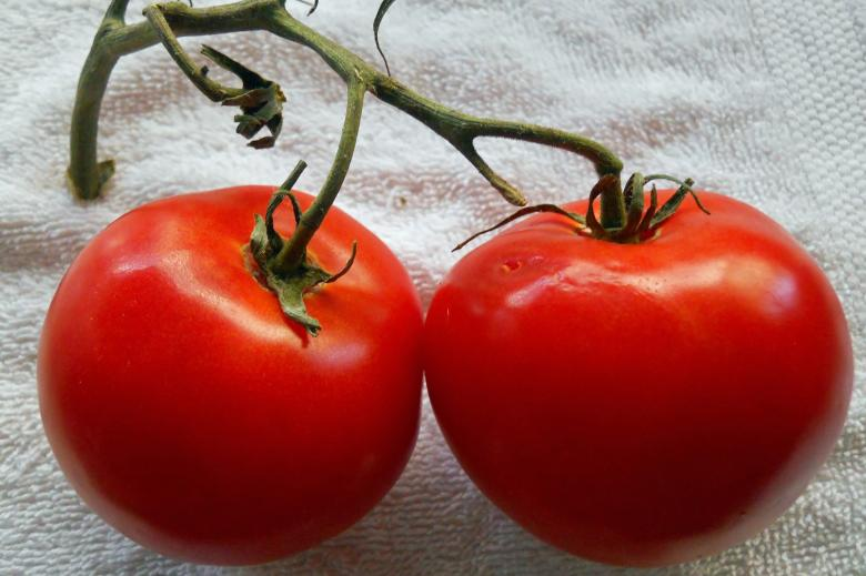 Free Stock Photo of Two juicy tomatoes Created by todd amen