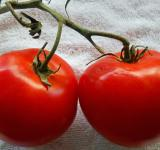 Free Photo - Two juicy tomatoes