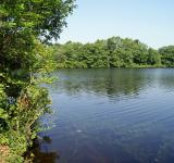 Free Photo - Summer Pond