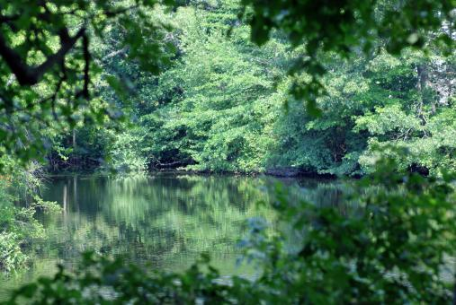 Hidden Pond II - Free Stock Photo
