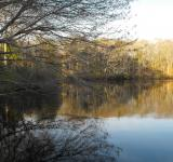 Free Photo - Calm Pond