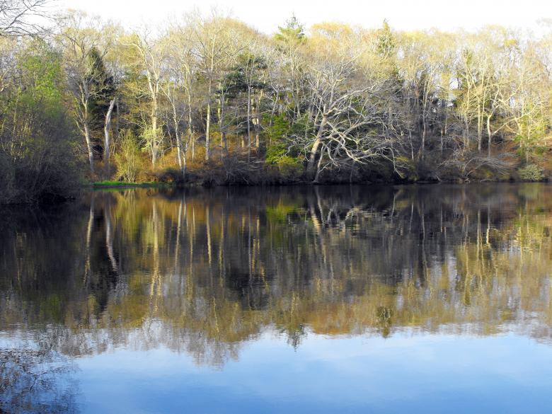 Free Stock Photo of Peaceful Pond Created by LoriAnn Norcross