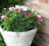 Free Photo - Potted Plants