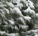 Free Photo - Snow Covered Tree