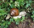 Free Photo - Snail on the grass