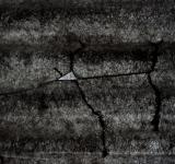 Free Photo - Cracked Plastic Texture