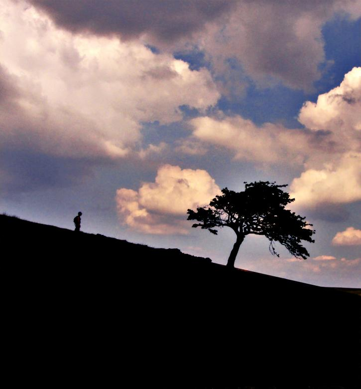 Free Stock Photo of Hiker & Tree Created by Jason Clark