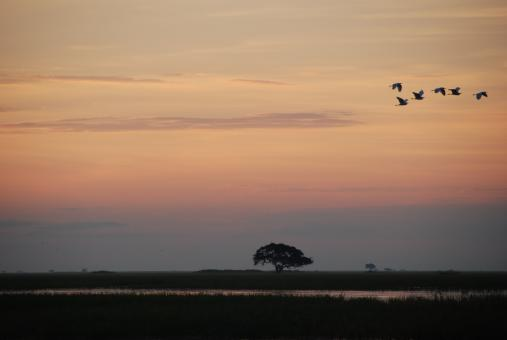 Chobe river sunset - Free Stock Photo