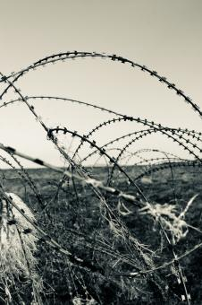 Barbed Wire - Free Stock Photo