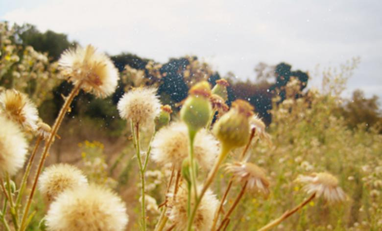 Free Stock Photo of Dandelions Created by Dasha