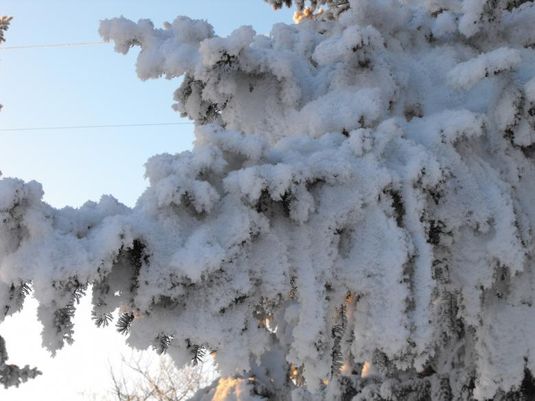 Free Stock Photo of Frosted Tree Created by Kyla M