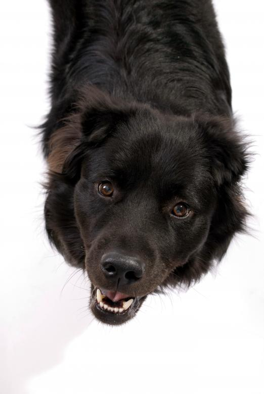 Free Stock Photo of Black dog Created by Peter Tompkins
