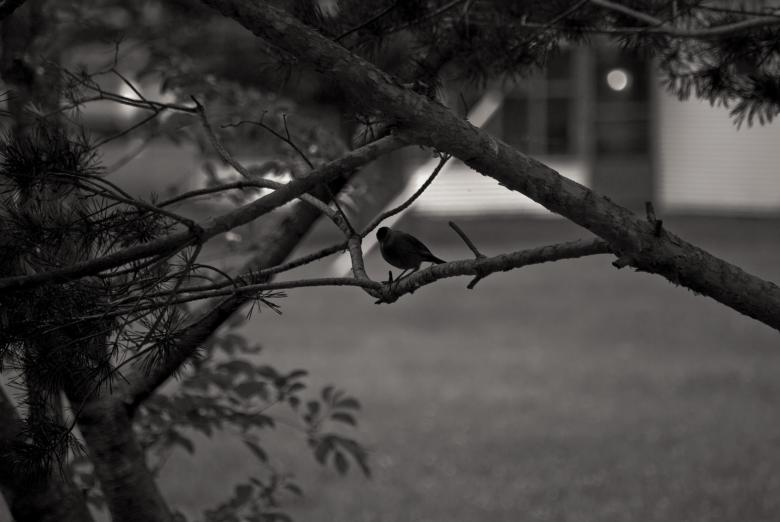 Free Stock Photo of Bird at Twilight Created by Angela Sickelsmith