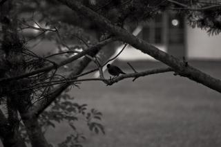 Bird at Twilight Free Photo