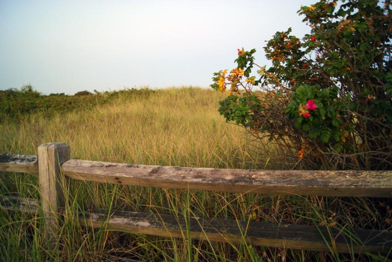 Free Stock Photo of Coastal Field Created by Brian Norcross