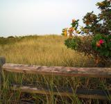 Free Photo - Coastal Field