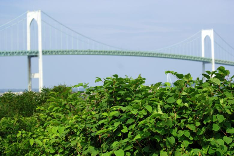 Free Stock Photo of Pell Bridge Created by Brian Norcross