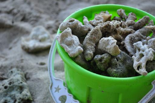 Corals in a toy pail - Free Stock Photo