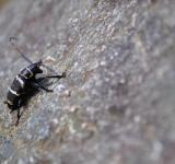 Free Photo - Beetle on a rock