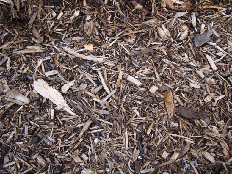 Free Stock Photo of Woodchips Created by Nathan Bierma