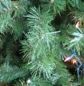 Free Photo - Christmas tree branch