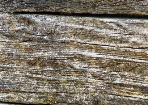 Wood Texture - Free Stock Photo