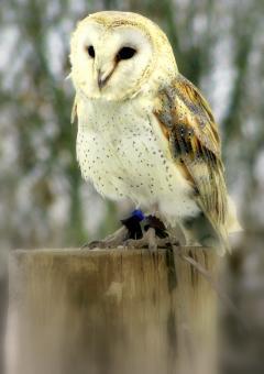 free birds stock photos stockvault net
