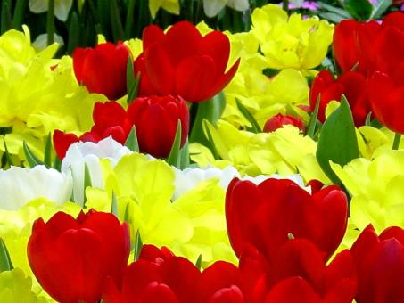 Yellow And red Flowers - Free Stock Photo