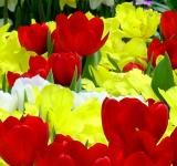 Free Photo - Yellow And red Flowers