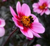 Free Photo - Bee On Flower