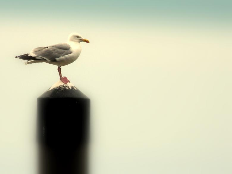 Free Stock Photo of Seagull  Created by Kate Towers