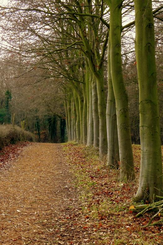 Free Stock Photo of Woodland Pathway Created by Kate Towers